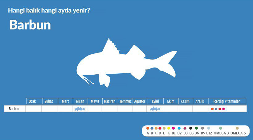 balik-infografik-grafik-fish-infographics-graphic-barbun